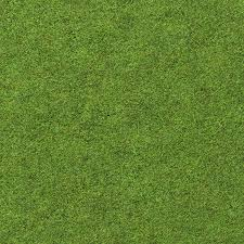 preview tall grass seamless texture5 tall