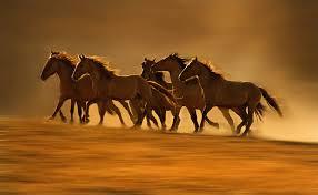 wild horses mustang running. Contemporary Mustang Wildmustangsrunningfree1021 Throughout Wild Horses Mustang Running A