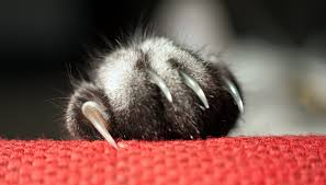 how and why you should clip cats nails