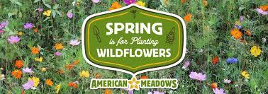 Planting Wildflowers American Meadows