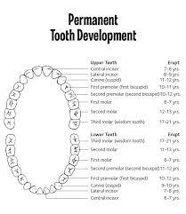 What Age Do Kids Lose Teeth Chart When Do Kids Start Losing Teeth Bountiful Dental
