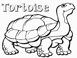 Small Picture Tortoise Coloring Pages Free Coloring Pages Coloring Coloring Pages