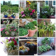 Small Picture Garden Plot Ideas 30 X 30 Plot In A Community 595 Best