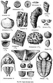 Image Result For Identify Lake Erie Fossils Preschool