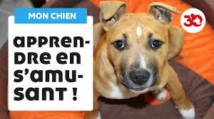 Education du chien : les bases de l'éducation canine - YouTube
