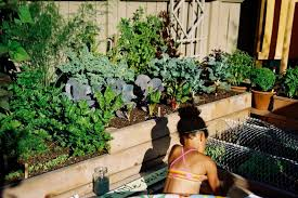 easy herb and vegetable garden designs