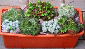 Bepflanzter Balkonkasten 40 Cm Sempervivum Sedum Wintergr N Bepflanzter Balkonkasten Cm Sedum Wintergruen