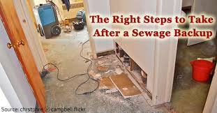 learn the right steps to take after a sewage backup