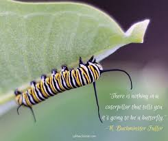 Metamorphosis Quotes Amazing 484848 Quote Of The Day Metamorphosis Requires Major Change