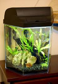 small screenshot 1 office fish. this is a really hlepful article about setting up small fish tank the person screenshot 1 office