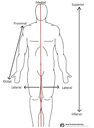 anatomical terms of location anterior posterior teachmeanatomy fig 1 0 anatomical terms of location labelled on the anatomical position