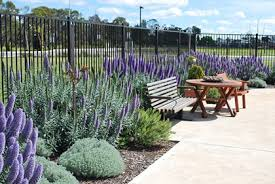 Small Picture Gardens and outdoor spaces healthvic