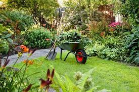 garden care. garden-care garden care n