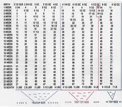 Cavachon Puppy Weight Chart 60 Rational Maltese Puppy Weight Chart