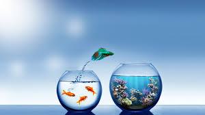 Beautiful Cute Fish Wallpaper Hd
