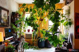 indoor home office plants royalty. Large Indoor Trees Architecture Ravenea Plant Luxury Model House Sun Room Designer Home Royalty Free Stock Broad Leaf Plants Office I