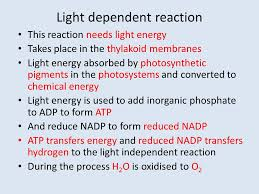 light dependent reaction