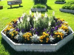 easy flower gardening garden easy to grow flower plants in india