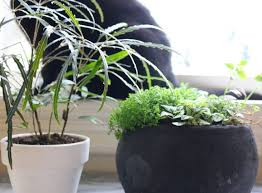how can i stop my pets from eating poisonous plants