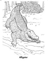 Small Picture Printable Alligator Coloring Pages Coloring Me