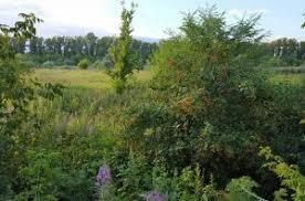 Купить земельный участок в районе Ставропольский в регионе  Купить земельный участок 37 соток Выселки с