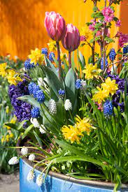 planting bulbs in pots a guide the