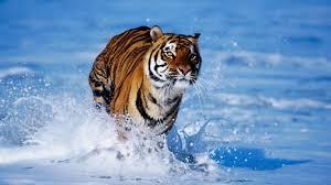 beautiful wild animals wallpapers. Exellent Wild Wild Animal Wallpaper Desktop  Coolstyle Inside Beautiful Animals Wallpapers E