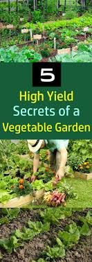 Kitchen Gardening 17 Best Ideas About Vegetable Gardening On Pinterest Gardening