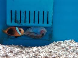 petco animals fish. Plain Petco Deadfishpetco600x450jpg On Petco Animals Fish E