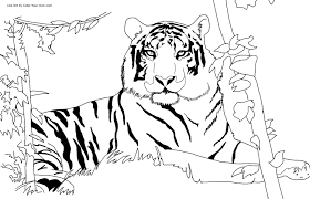 Small Picture Bengal Tiger Coloring Page