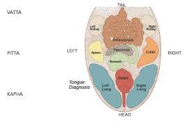 Ayurveda Tongue Chart The Tongue Never Lies