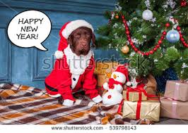 Black Labrador Christmas Stock Images RoyaltyFree Images Gifts On Christmas
