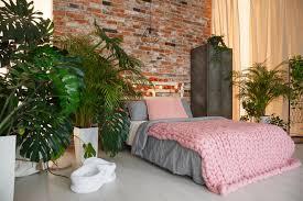 Schlafzimmer Kreativ Pflanzen Im Schlafzimmer In Bezug Auf Fluch