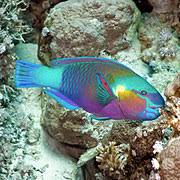 Great Barrier Reef Fish Are The Most Diverse On Earth
