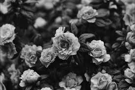 black and white flowers tumblr photography. Contemporary And Alternative Black And White Dark Floral Flowers In Black And White Flowers Tumblr Photography