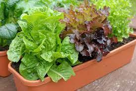 ปลูกผัก 3 ฤดู ปลูกกินเองง๊ายง่าย ปลูกได้ทุกฤดู – Dohome Guide.