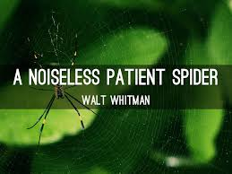a noiseless patient spider explication essay essay for you a noiseless patient spider explication essay image 6