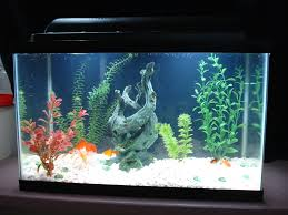 Cool Aquariums For Sale A Guide To Finding The Best 10 Gallon Fish Tank For You