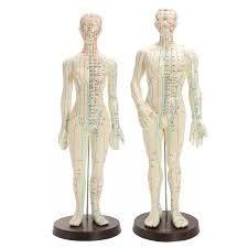 Human Body Acupuncture Medical Model Male Female Meridians Model Chart Book Base 48 50cm