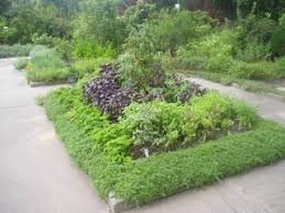 Small Picture Learn to grow herbs with the Garden Design Academy
