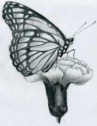 Disegni A Matita Facili Farfalla Profilo Posata Garofano Bianco Nero
