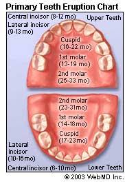 Teething Chart Babies Baby Teeth When They Come In When They Fall Out