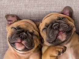 Image result for funny dog images