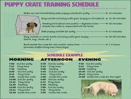 Golden Retriever Puppy Feeding Chart Effective Puppy Crate Training Schedule Golden Retriever