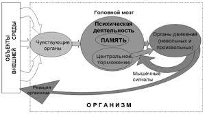 Память и деятельность