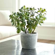 office cubicle plants. Inside House Plants Good That Are Safe Your For Office Cubicles Sale Home Depot Cubicle