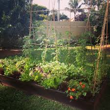 Small Picture Ready To Grow Gardens Planting organic vegetables herbs and