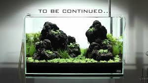 an ada 60 p layout using unzan stone part 2 planting and day 5 update you
