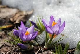 Pierwszy dzień astronomicznej wiosny, ale pogoda nie będzie nas  rozpieszczać. IMGW ostrzega