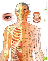 Acupuncture Chart Chinese Medicine Editorial Photography